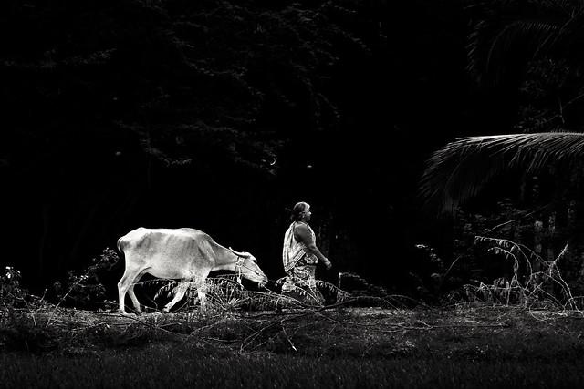 Herder !