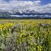 Julies Meadow by Jeff Clow