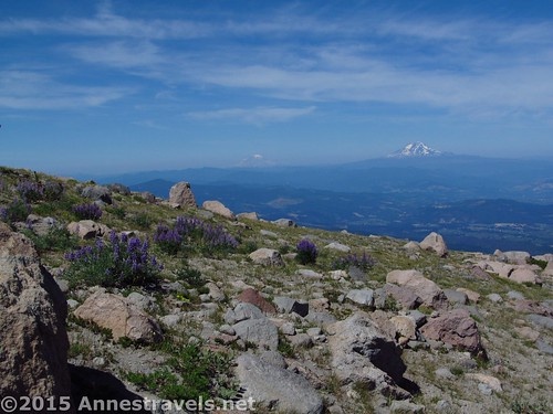 Looking across the wildflowers and rocks toward Mt. Rainier and Mt. Adams from the Cooper Spur Trail, Mount Hood National Forest, Oregon