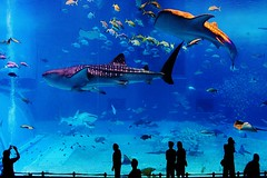 kaiyukan-aquarium-osaka-teach-abroad