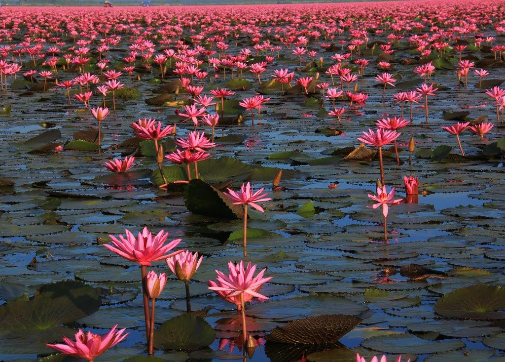 talaybuadaeng is also known as Red Lotus Sea