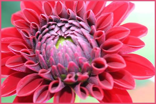 Dahlia grey wiki - Grey gardens documentary watch online free ...
