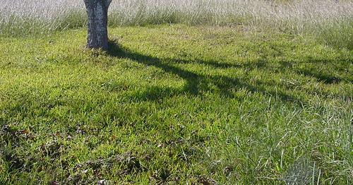allmyphotos tree shadow grass artsyfartsy