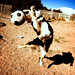 Shaolin Soccer Dog by Norby