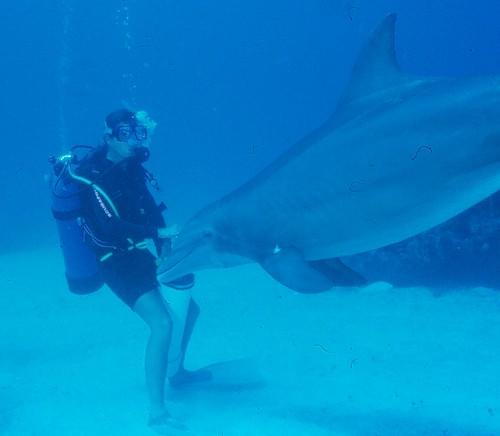 Scuba diver meets dolphin.