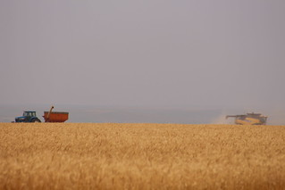 Farmer Steve waiting on a load of seed wheat.