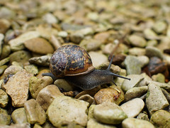 Questing snail