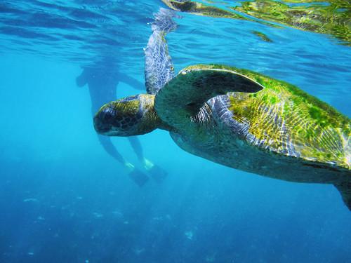 GALÁPAGOS turtle.jpg