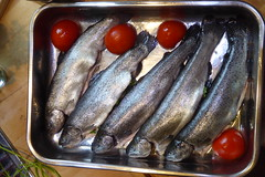 mackerel(0.0), smoked fish(0.0), capelin(0.0), cuisine(0.0), milkfish(0.0), fish(1.0), fish(1.0), seafood(1.0), food(1.0), sardine(1.0),