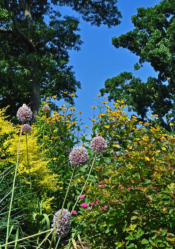 Pinkham Garden (3)