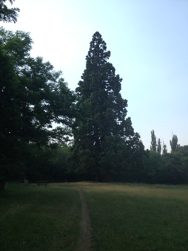 Sequoias in Budakeszi