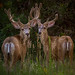 A Couple Bucks