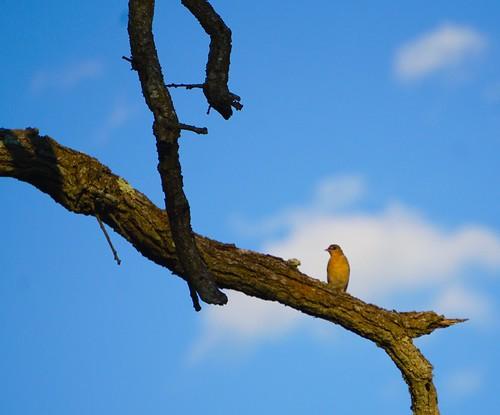A little birdie 4