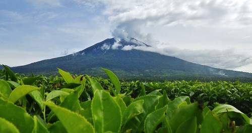 mountain kerinci jambi nationalpark indonesia mountaineering tea plantation adventure