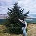Oh Christmas Tree by daedmike