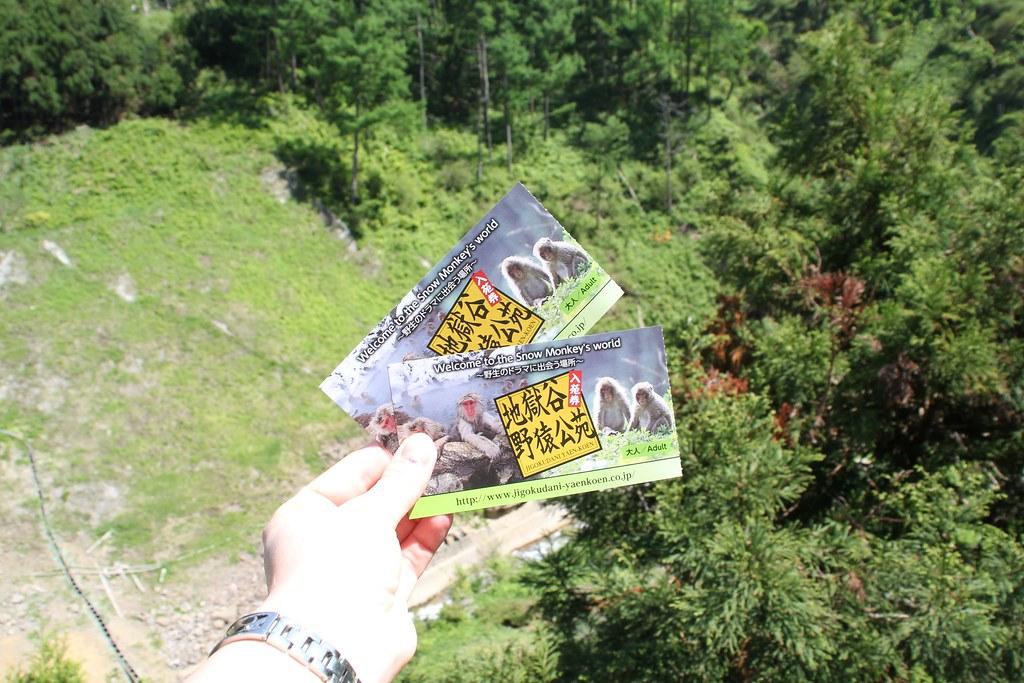 Jigokudani Monkey Park (6)