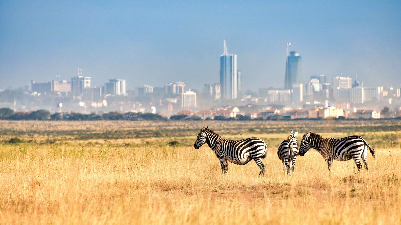 Things To Do in Nairobi - Nairobi National Park - Zebras