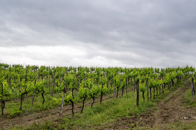 20150522-Tuscan-Wine-Country-0305
