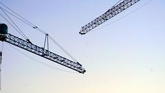 DC Dance of the Cranes 59103