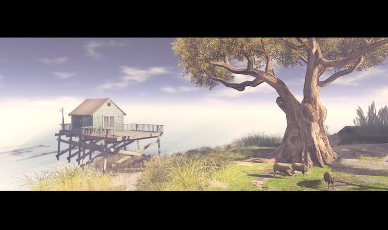 Calypso Dream