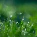 greenest by ecstaticist - evanleeson.com
