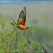 European Bee-eater Take-off. by LC's Eye (Wild Images of Africa)