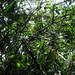 Lime Tree Bramble por districtinroads
