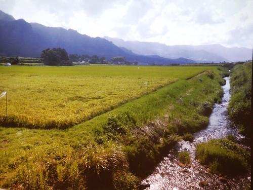 白川水源流入稻田,以湧泉水種植好米。翻攝自講師投影片。