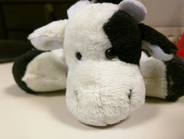 Can you give today and save a little cow?