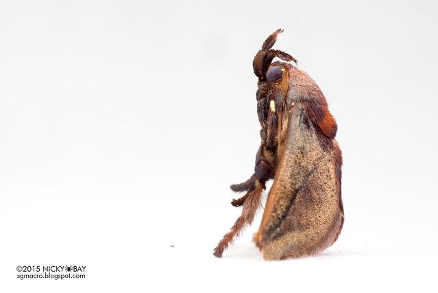 Moth - DSC_4071
