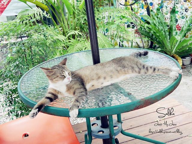 可愛貓咪 (1)