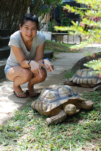 Hey look! The closest encounter that I have with a tortoise that big.
