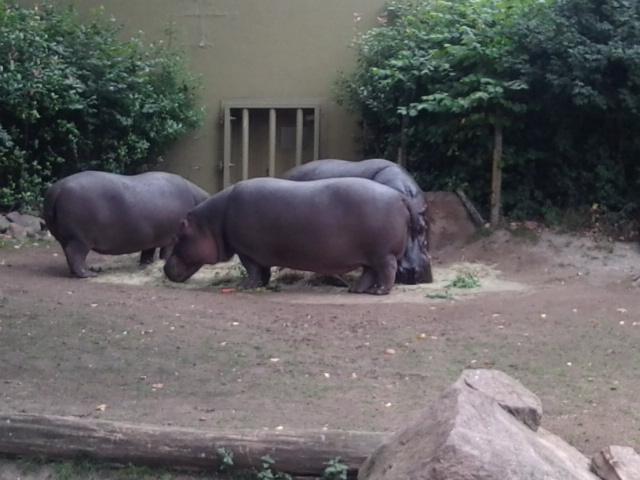 ...und die Nilpferde sagen tschüühüüß bis zum nächsten Mal!