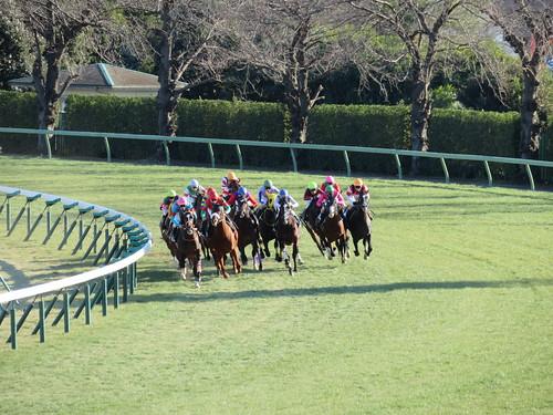 中山競馬場の芝スタンドから撮影したレースの模様
