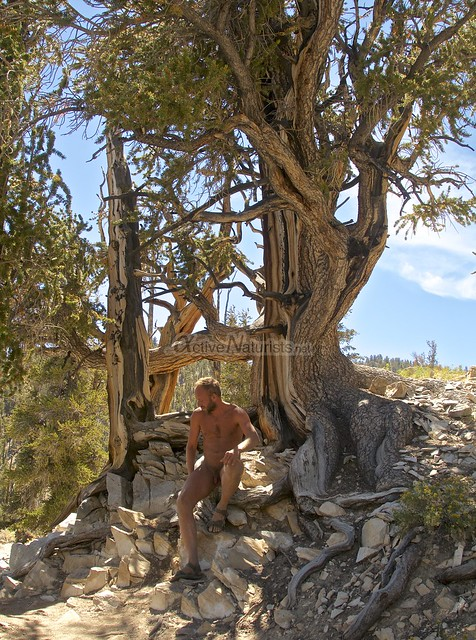 naturist 0002 Ancient Bristlecone Pine Forest, California, USA