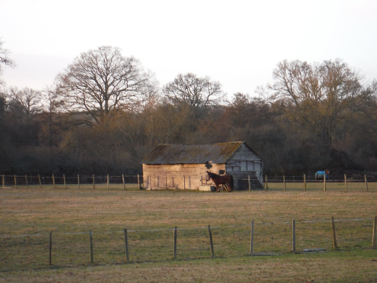 Horse and Shed SWC Walk 34 Newbury Racecourse to Woolhampton (Midgham Station)