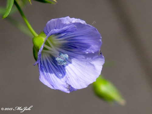IMG_2429a