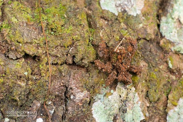 Masked hunter assassin bug (Reduviidae) - DSC_3902