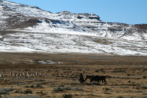 Taking the ponies for a walk, Lesotho