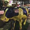 Uma vaka #vaka #cow #saopaulo