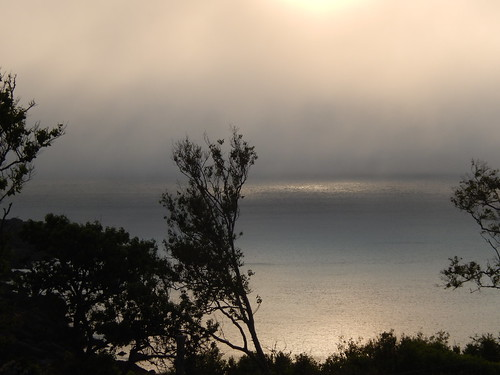 Whale Cove - mist
