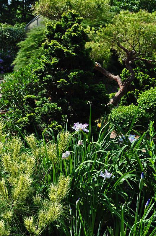 Pinkham Garden (6)