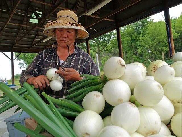 DSC06892 Mao onions HAFA FARM