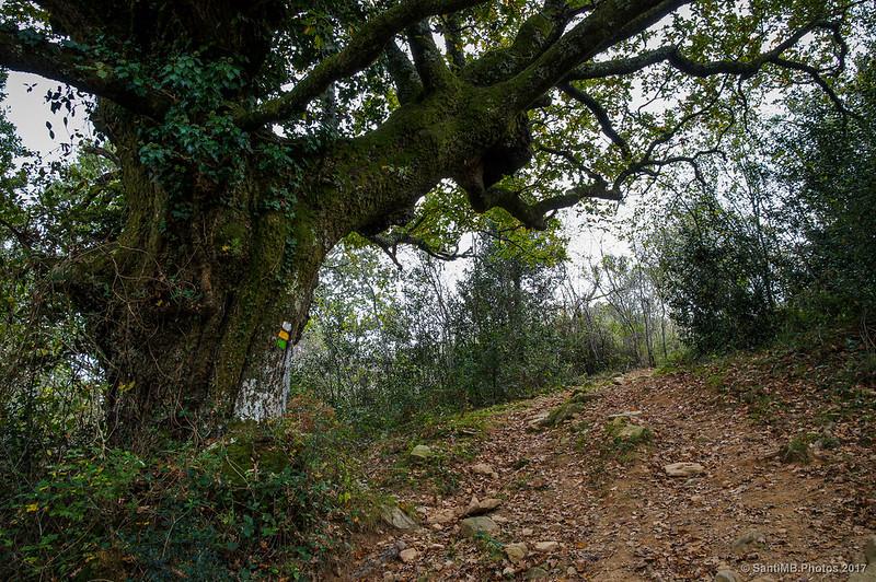 El árbol marcado
