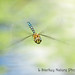 FACE OF A MIGRANT HAWKER by lindastarkey158