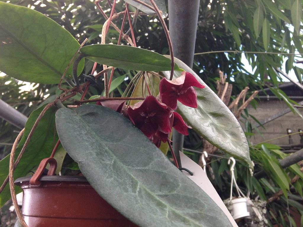 Orchidarium de Prangins 18684780604_a633304b24_b