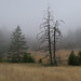 Mt Tamalpais Meadow in the Fog by AGrinberg