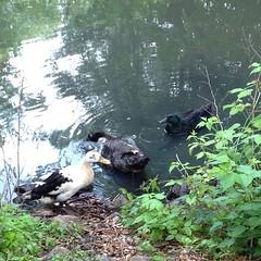 M R ducks.