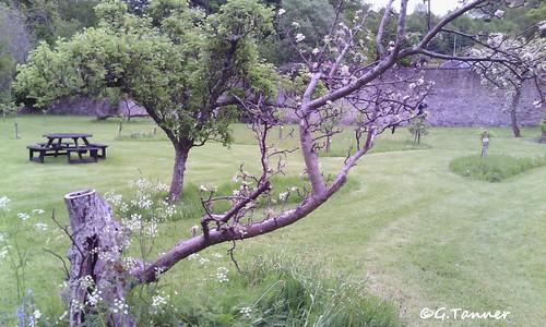 Melrose Priorwood Garden