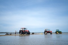Tractors of oyster fishers in Noirmoutier